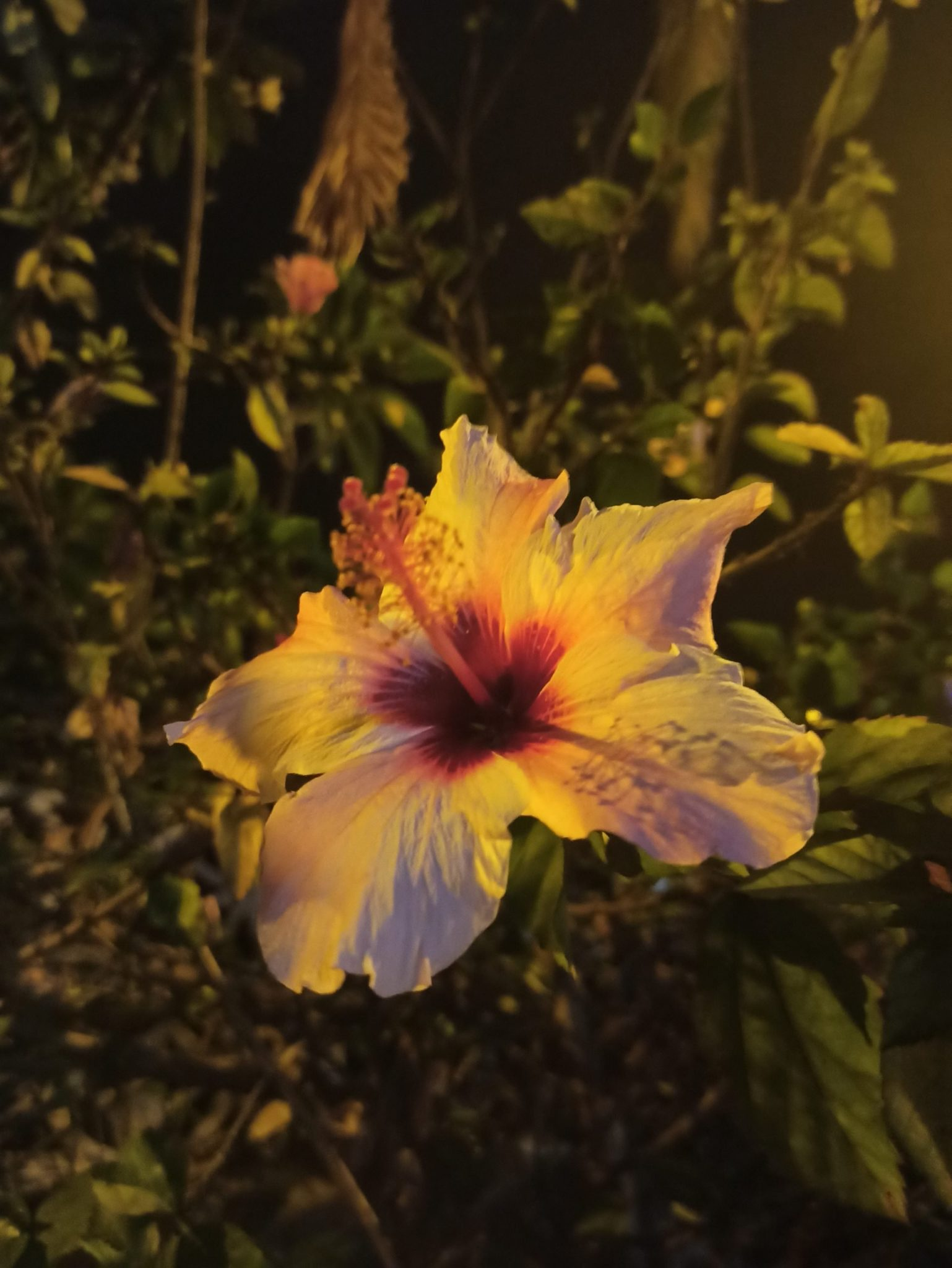 A photo of a Hibiscus flower, which Amanda photographed after moving away from Madrid.
