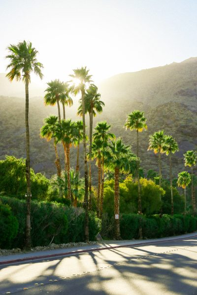 Golden hour in Palm Springs, California