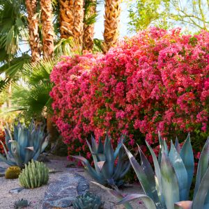Morning light in Palm Springs, California