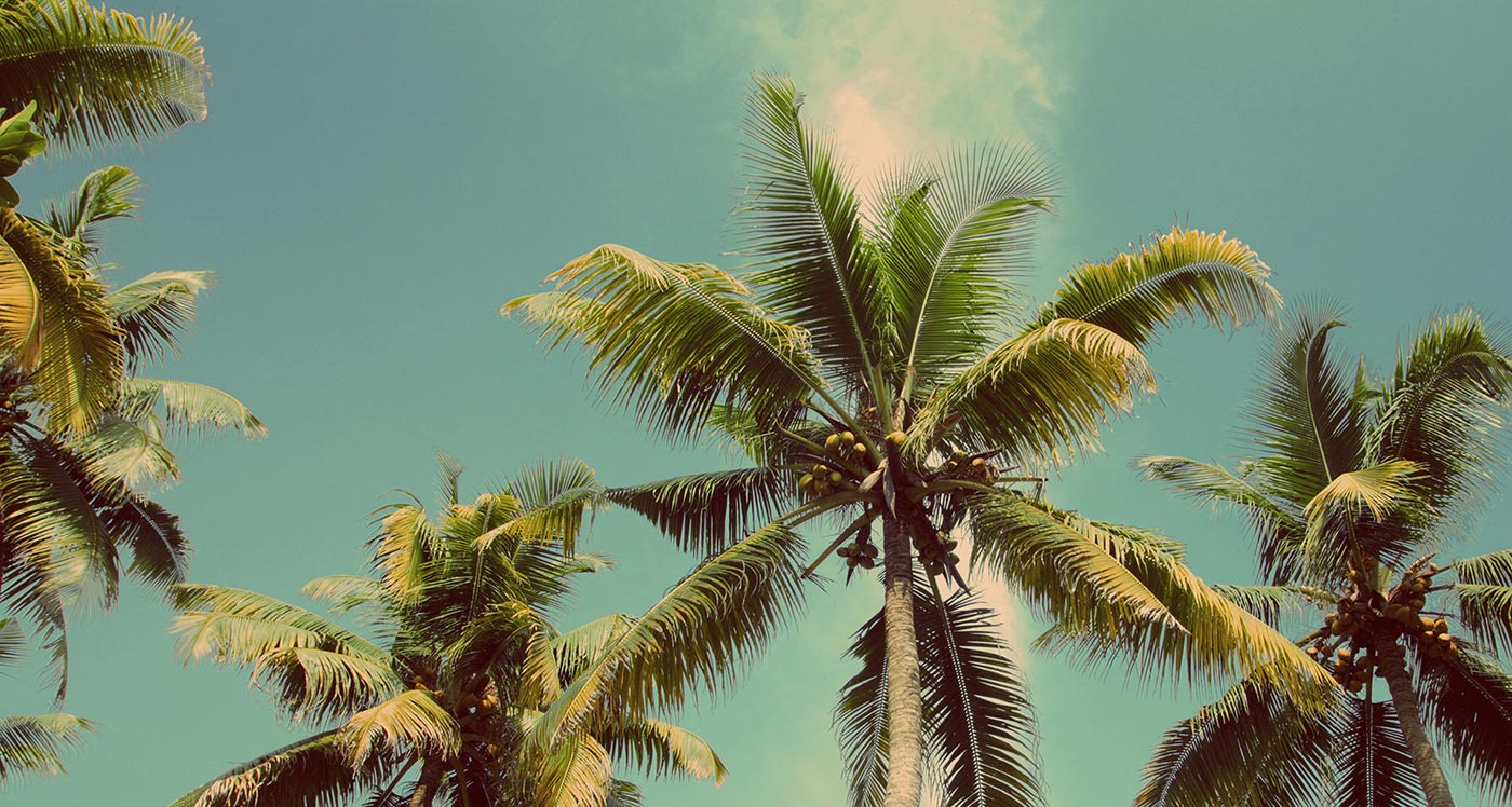 trees, sky and coconuts