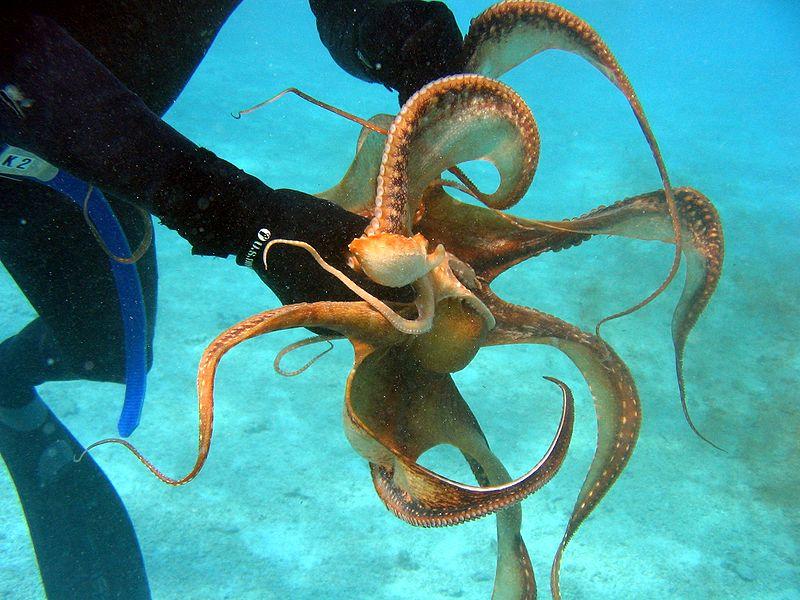 Malta lagoon island water travel abroad octopus scuba diving