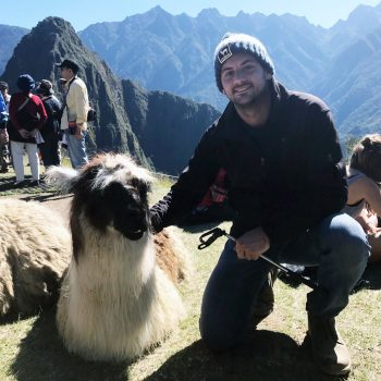 lama in peru tyler black traveling