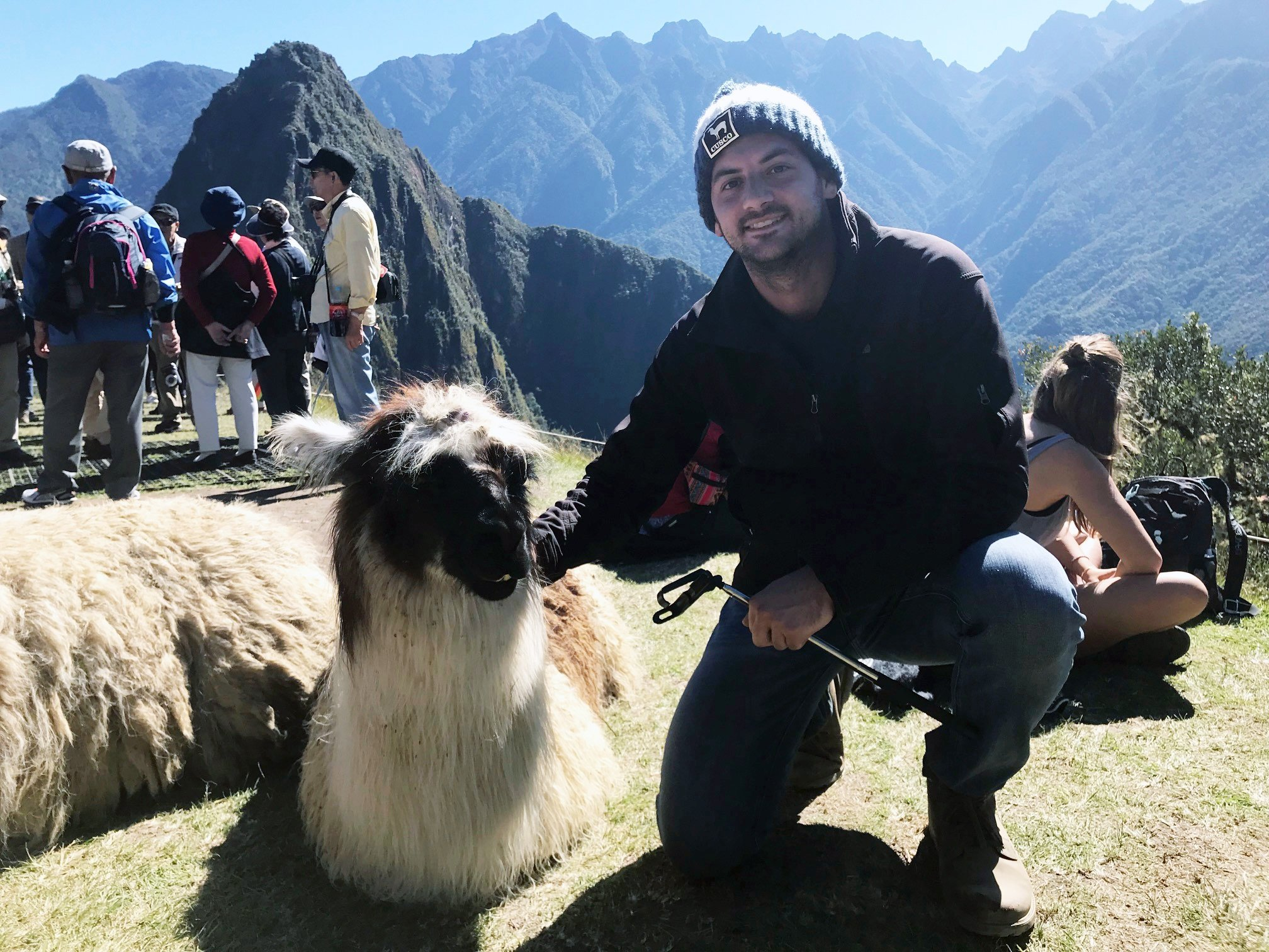 lama in peru tyler black traveling