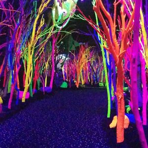 A neon glow-in-the-dark forest Morgan found during her road trip back to Texas within the last five years.