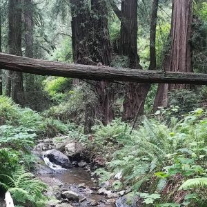 A photo of a hiking trail in Washington, which Morgan visited within the last five years.