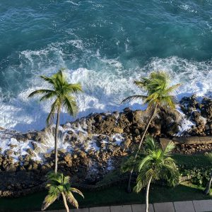 A photo from above of palm trees in front of the ocean