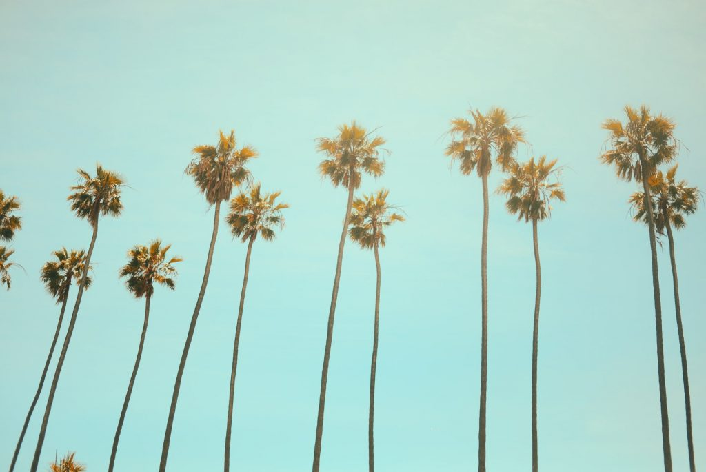 A filtered image of tall palm trees in California.