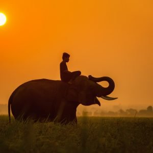 An elephant and its rider in the setting sun.