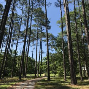 After living abroad, Leesa Truesdell moved to Tallahassee which has many pine trees.