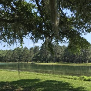 A photo of a lake in Tallahassee, where Leesa moved after living abroad.