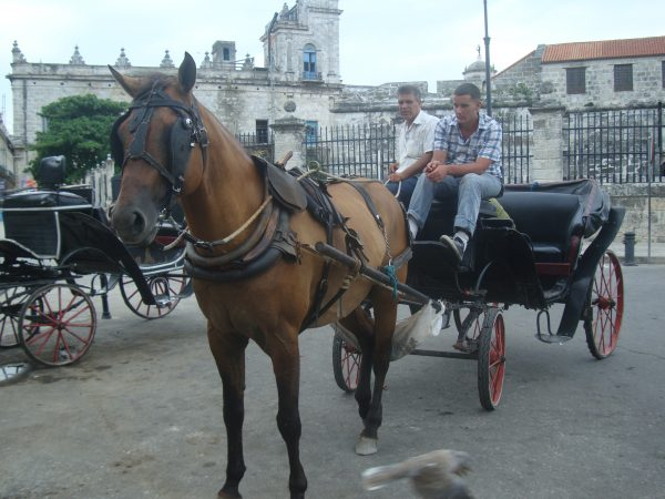 A photo of a horse buggy, another form of transportation for the tourists.