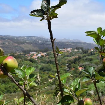 A picture of the landscape in Gran Canaria