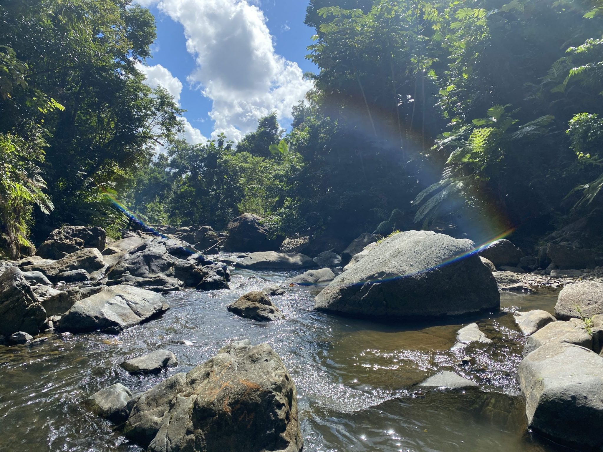 The beautiful El Yunque, a can't-miss activity in San Juan