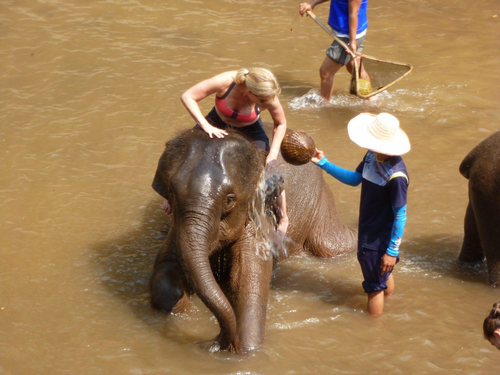 Elephant taking a bath, copyright ANIMONDIAL