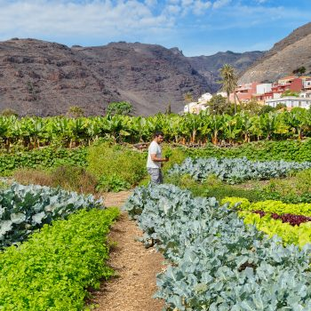 The Hotel Jardin Tecina's Eco Finca Tecina, where they grow their own produce for their contribution to the vegan Canary Islands