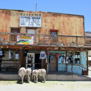 Donkeys in front of the Hideaway Motorcycle Museum.