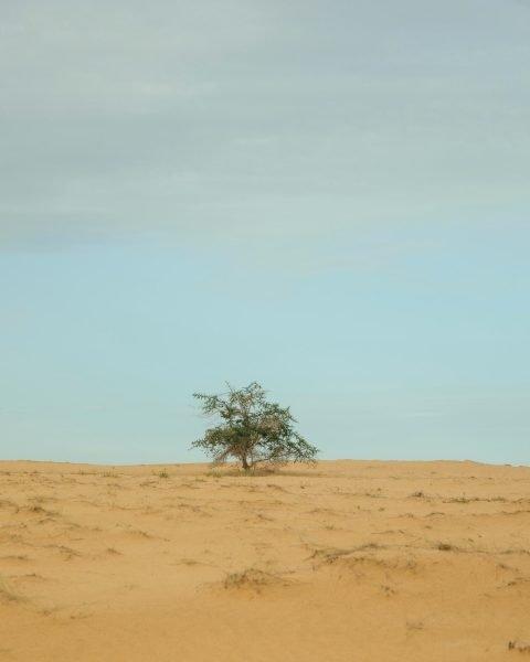 A lone tree in Kebemer, Senegal.