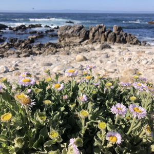 A photo of flowers on a beach in California