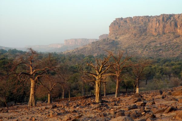 Landscape With Trees And Cliffs Of Dogon Country In Mali