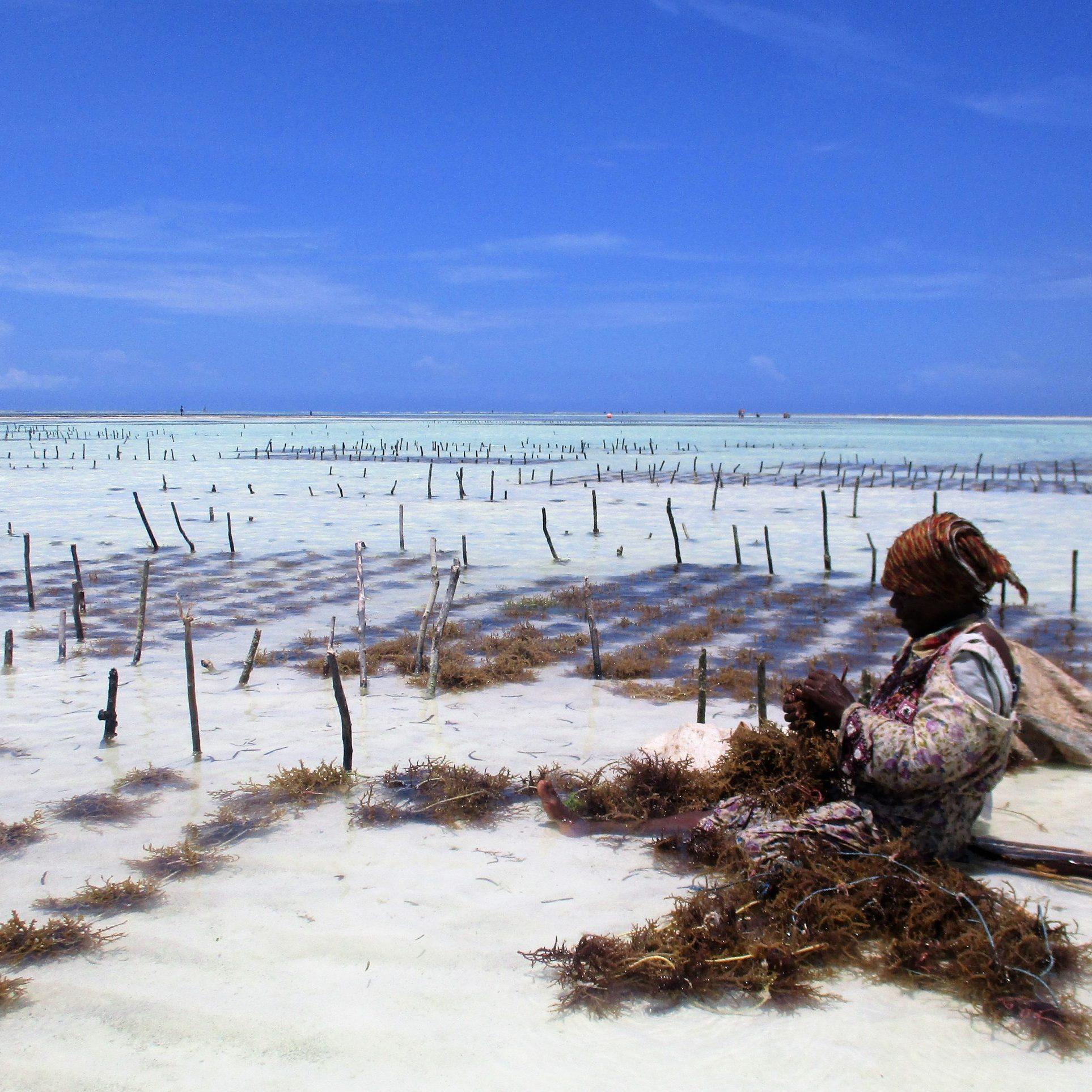 A seaweed farmer in Zanzibar