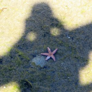 A starfish posing for a picture