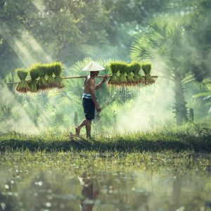 A Cambodian farmer.