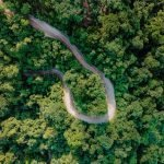 An image of a road cutting through jungle from above.