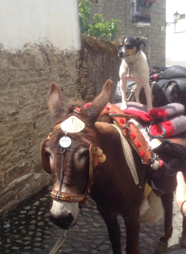 A photo of a dog riding a donkey