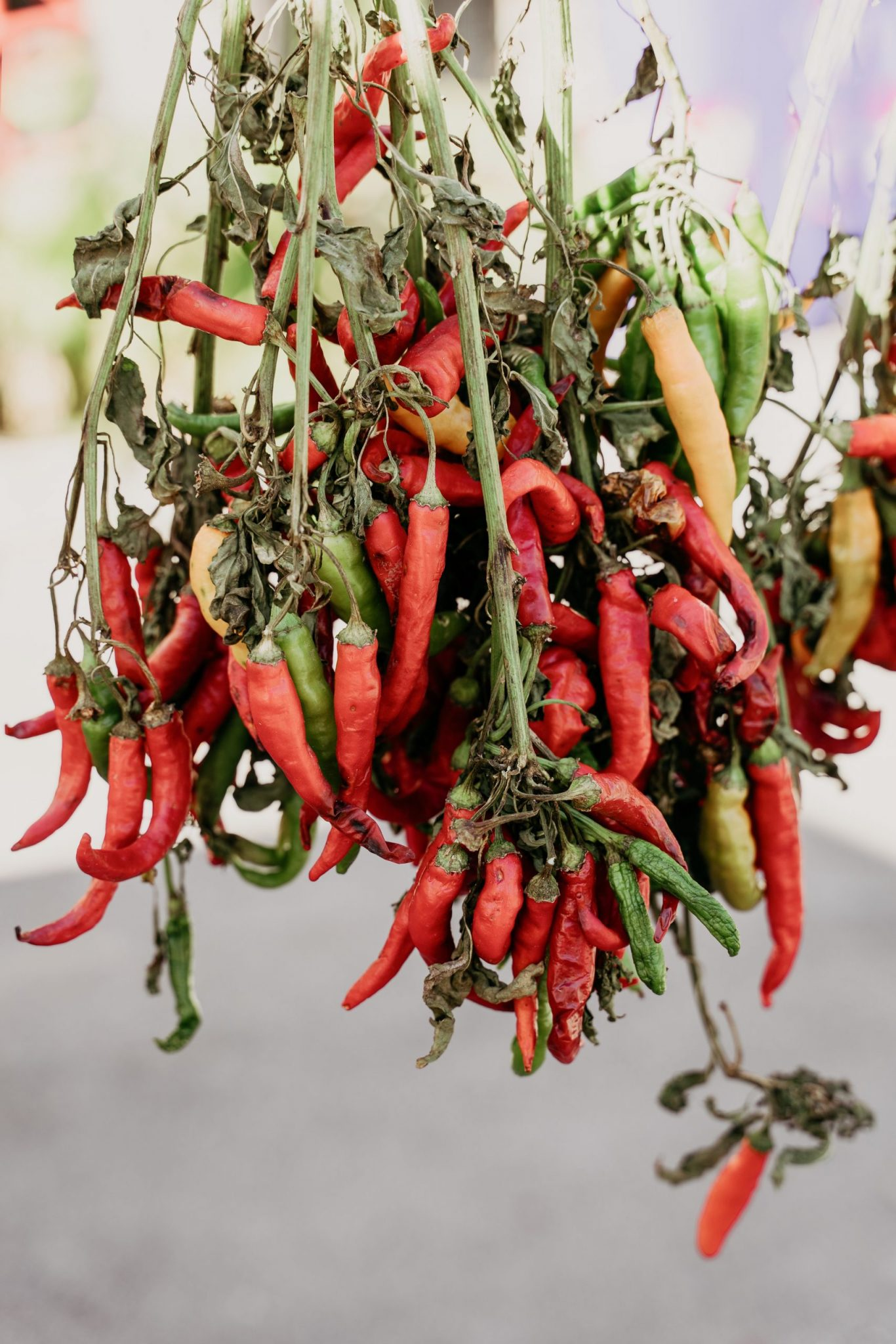 A photo of chilis from Italy