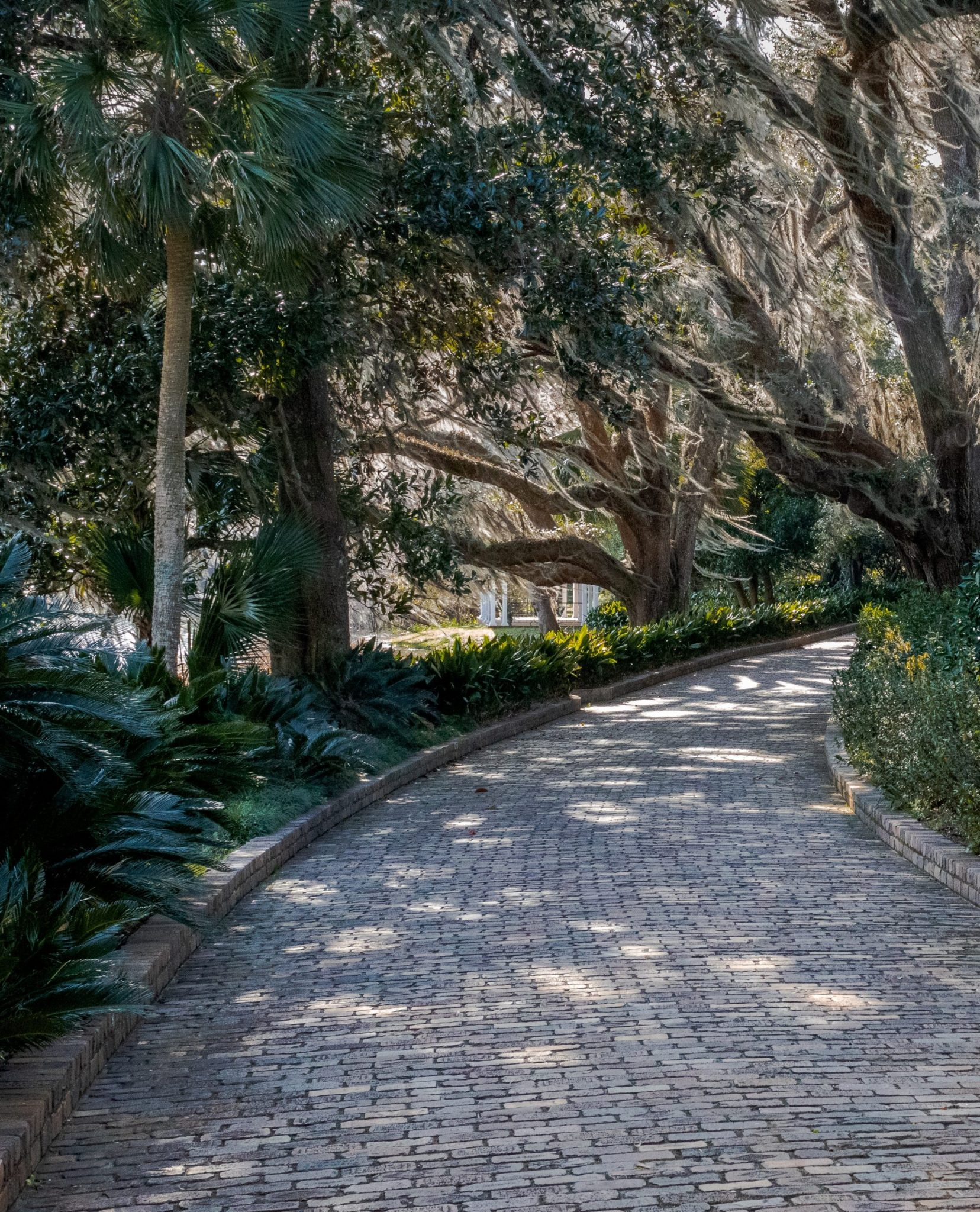 A pathway in one of the parks in Tallahassee, Florida, a benefit of studying abroad.